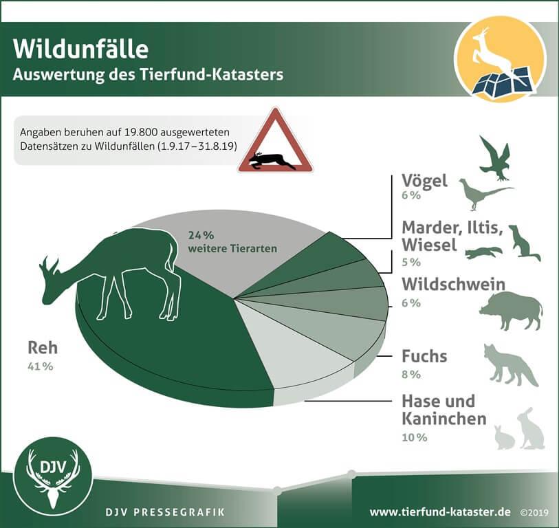 Wildunfälle Grafik Auswertung Tierfundkataster 2017 bis 2019