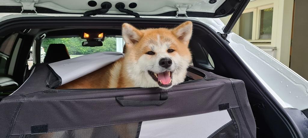 Hundehaare aus dem Auto entfernen