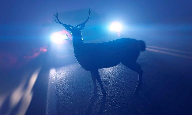 Wildunfälle: Gefahr durch Reh, Hirsch und Wildschwein